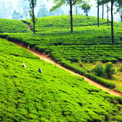 visit-our-lanka.com-4-days-tour-package-3